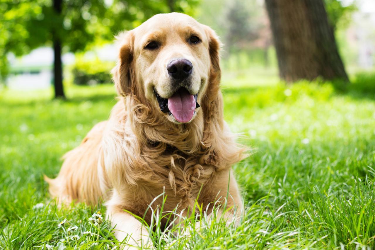 Plusieurs raisons pour avoir un chien !